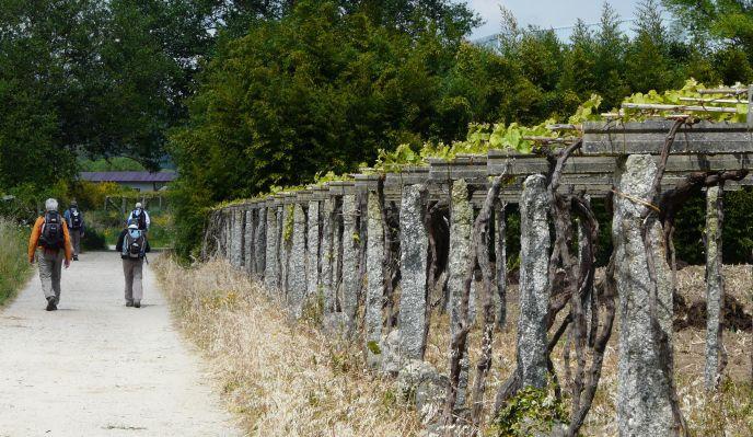 Le chemin portugais, de Ponte de Lima à Santiago de Compostela