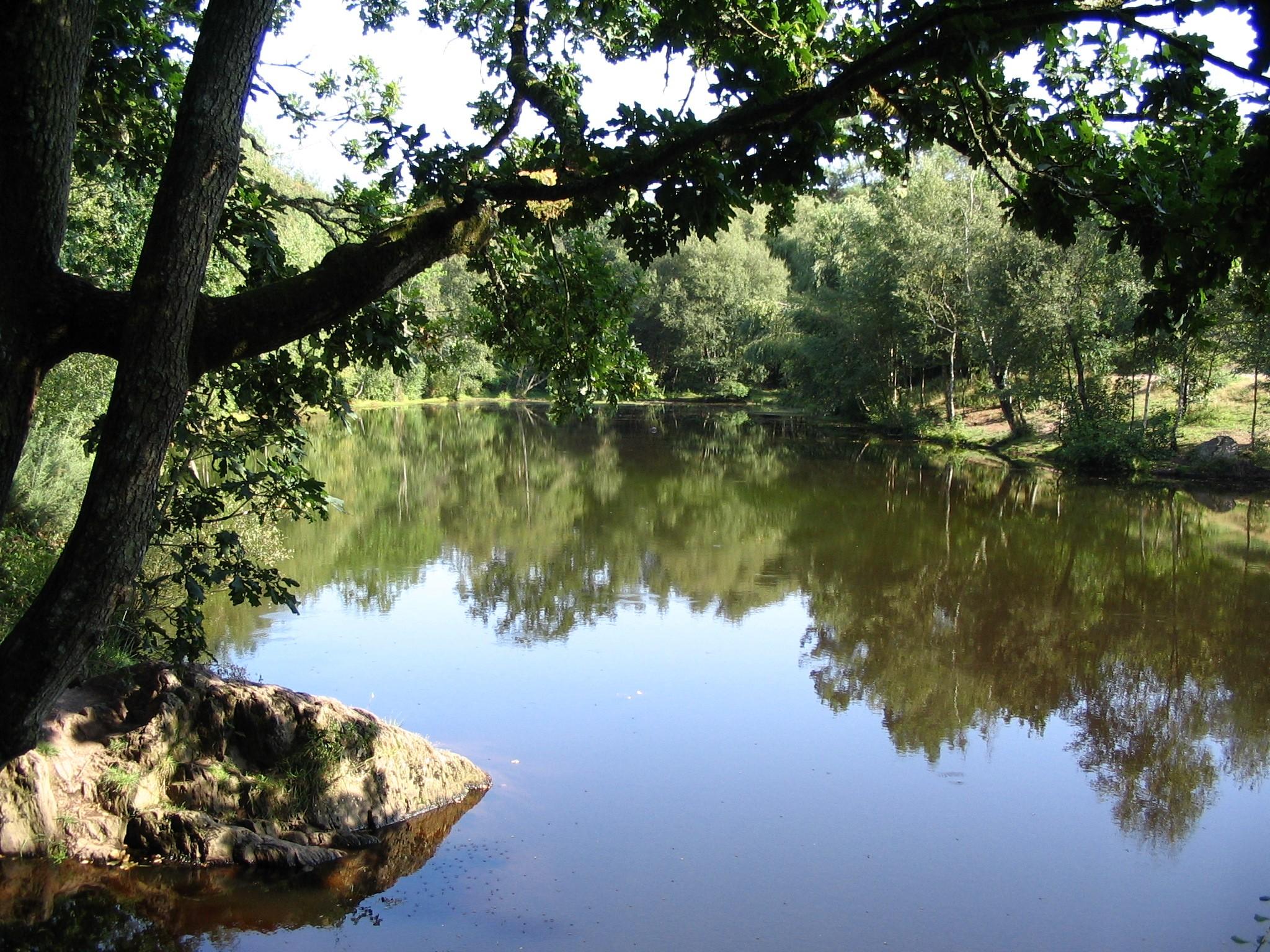 Très Agence de voyages - séjours et randonnées organisés - La Forêt de  HI95