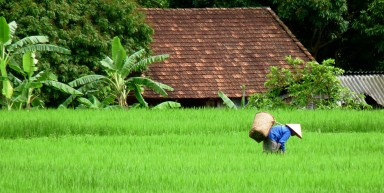 Le Vietnam