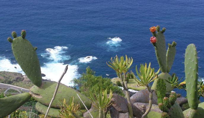 Tenerife, l'île du printemps éternel