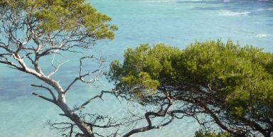 Les îles d'Or (en étoile)